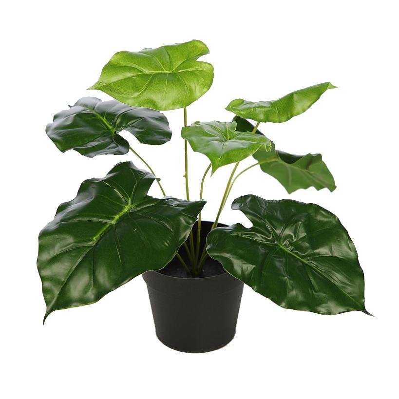 Planta alocasia oreja de elefante con maceta for Planta ornamental oreja de elefante