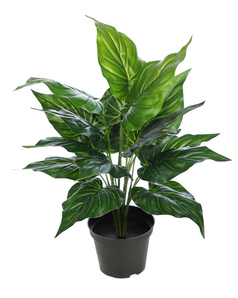 Planta en maceta lirio 45 cm - Hierba luisa en maceta ...